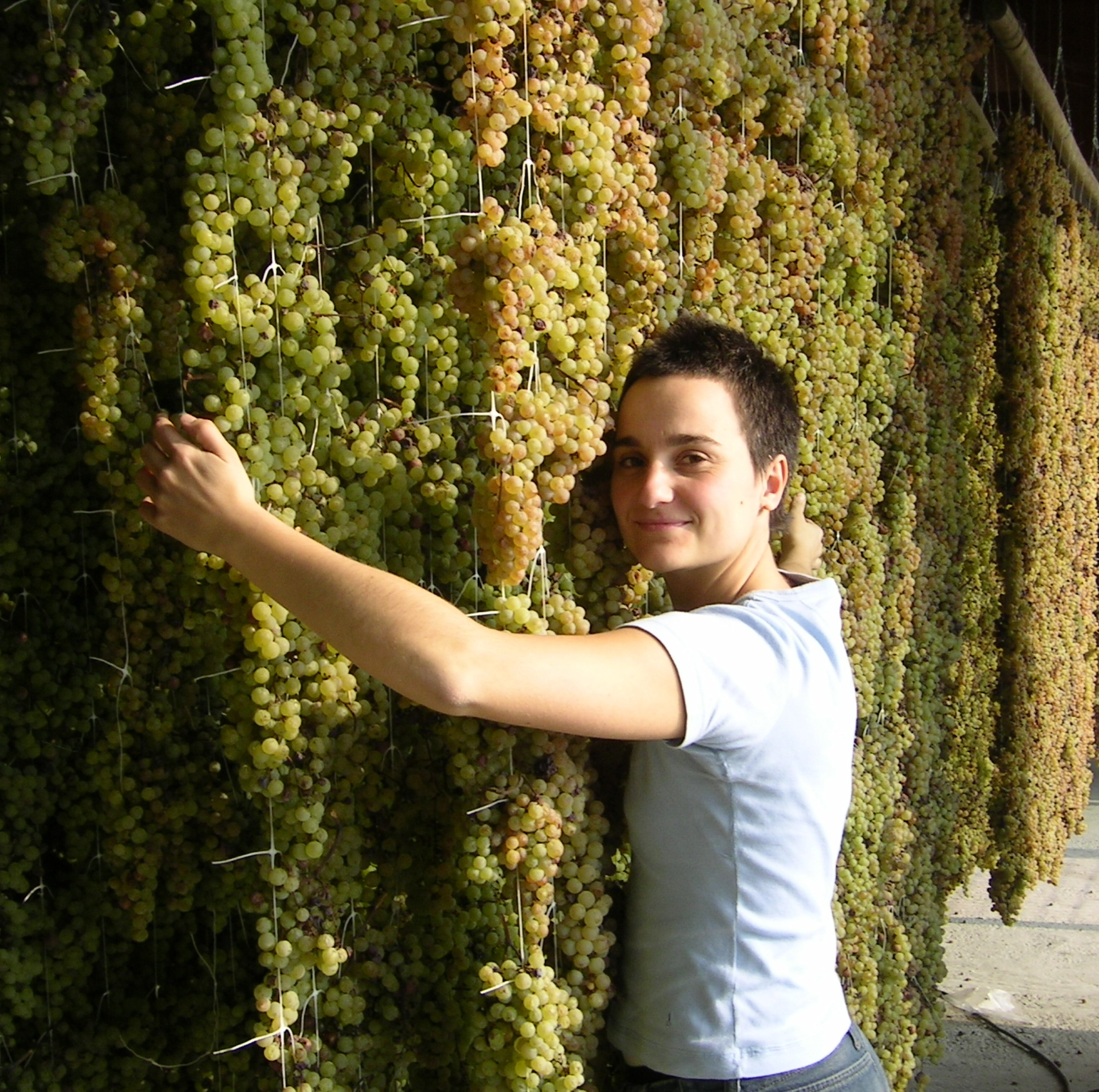 Chiara with the drying grapes