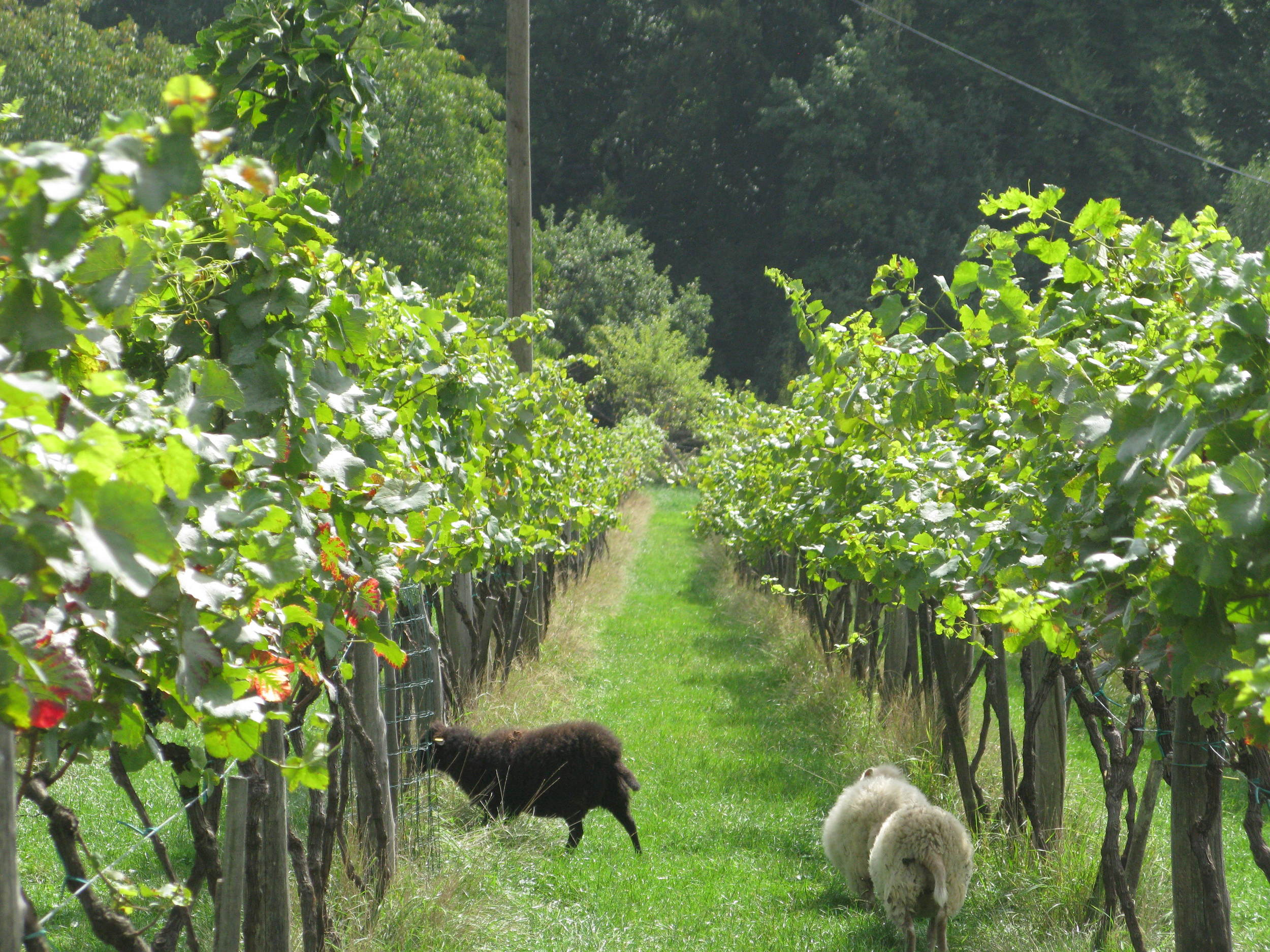 The tour takes in large, small and biodynamic wineries