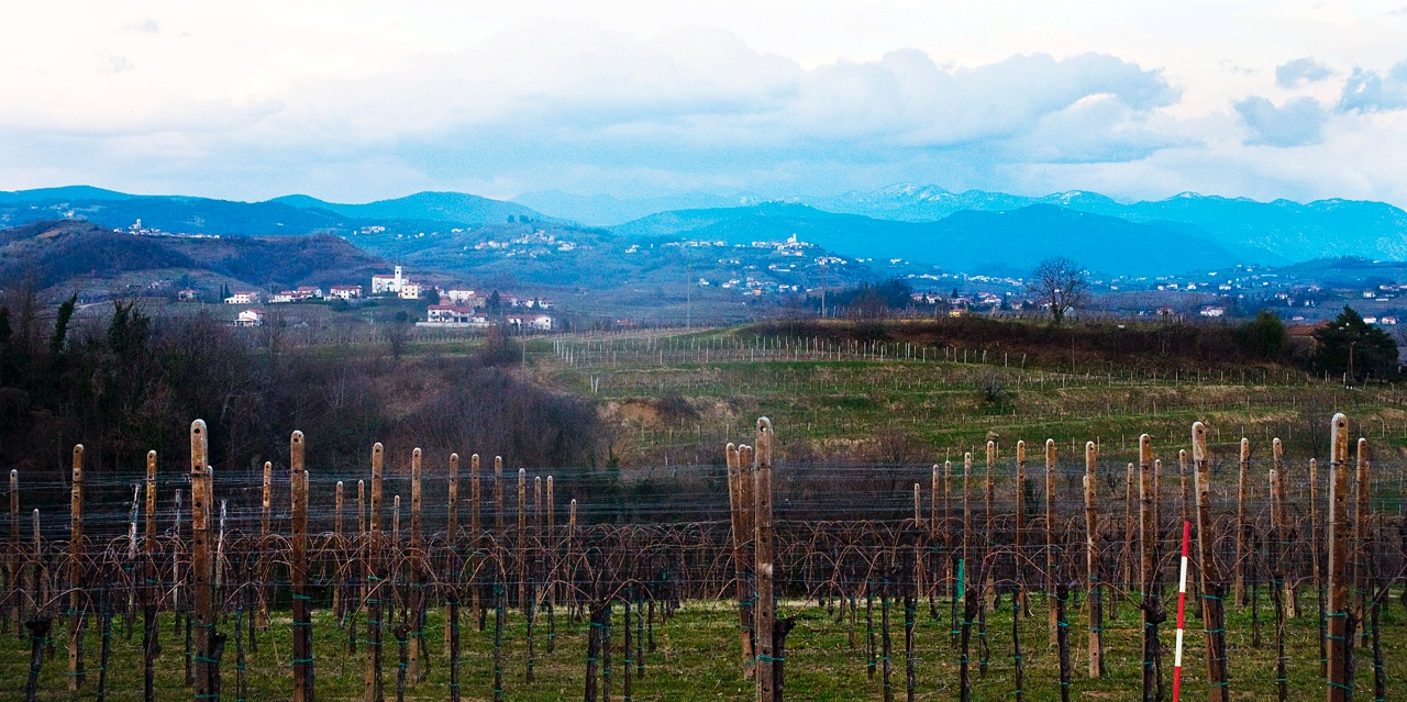 Goriska Brda is probably Slovenia's most famous sub-region, as the hills roll into Italy's Collio
