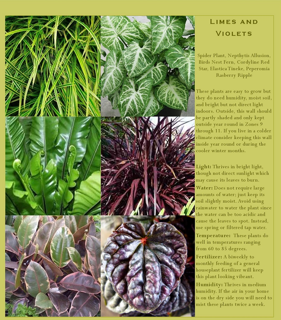 Spider Plant, Ferns, Peperomia, Nepthytis, and Cordyline for your vertical garden