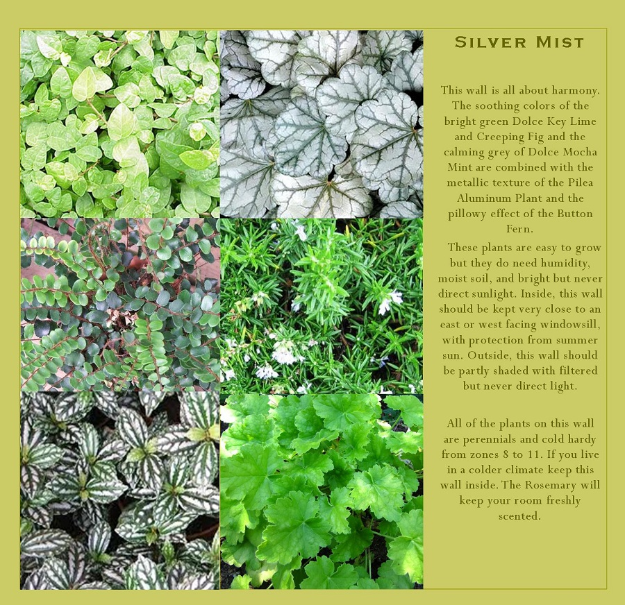 Ferns, Heuchera, and Creeping Fig that can be grown in your vertical garden