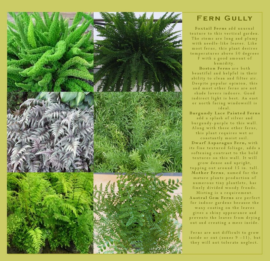 Ferns that can be grown in your vertical garden.