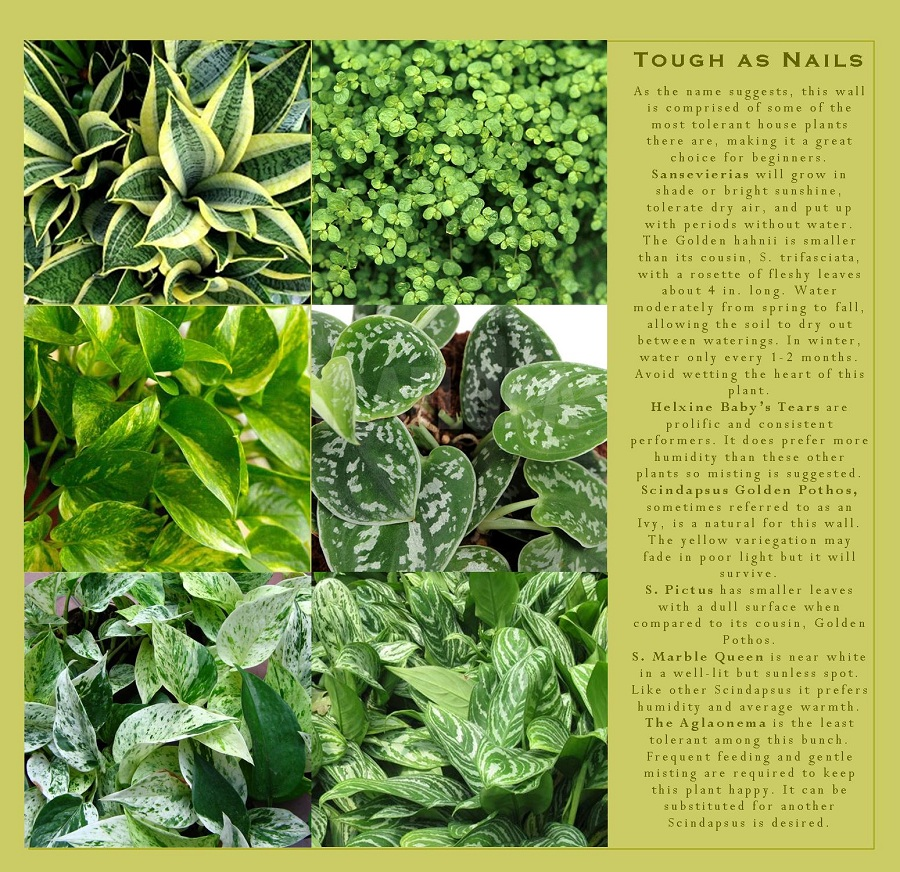 Shade tolerant plants that can be grown in your vertical garden