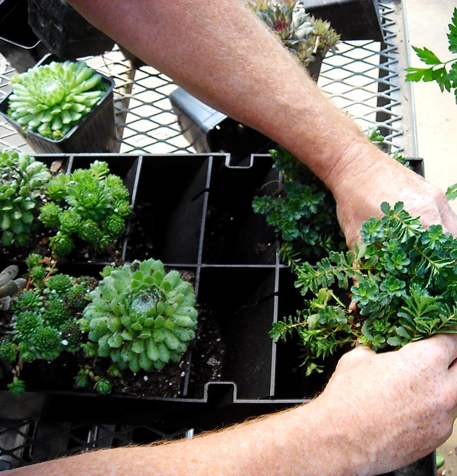 DIY vertical gardens