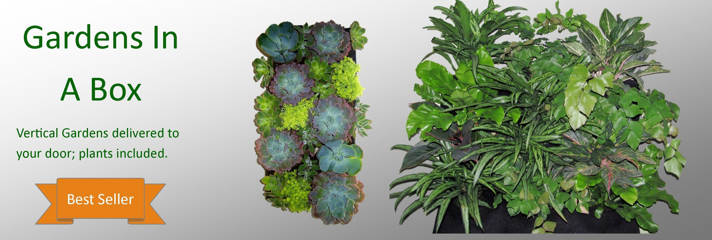 Living Walls that come with Plants!