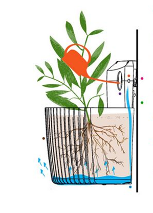 how to water your living wall