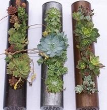 3plantedcylinderhires.jpg