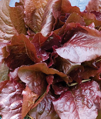 Lettuce - Red Salad Bowl.jpg