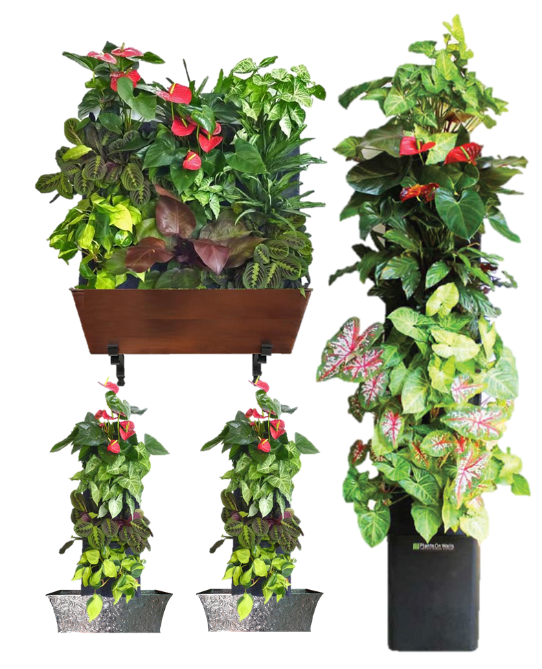 Water Your Living Wall Automatically