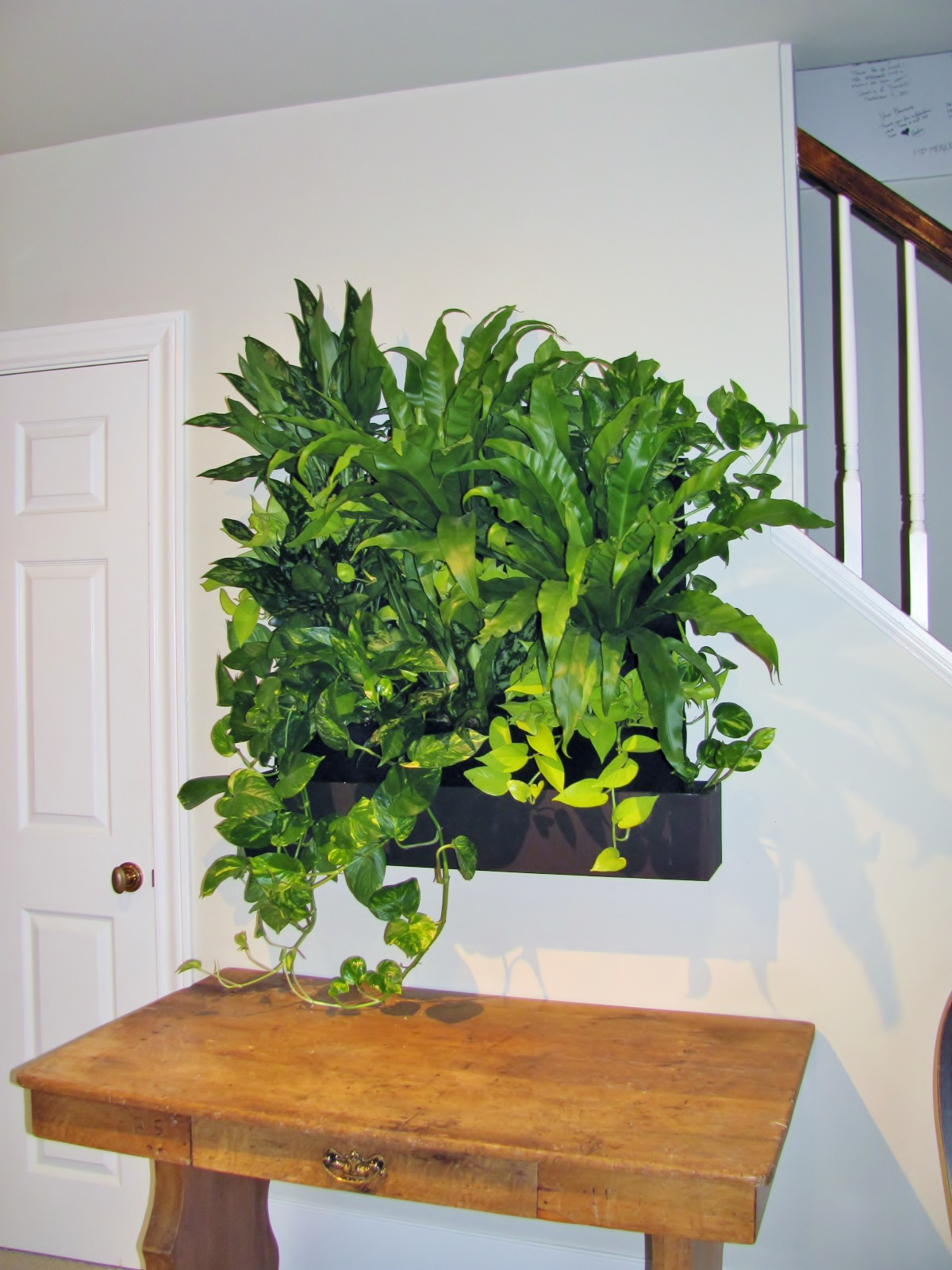 Large Living Wall Kit WITH Tropical Plants