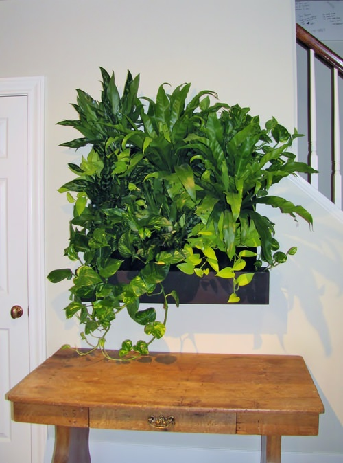 Large Living Wall Kit + Plants