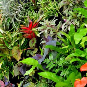 Bromeliads, Ferns, Chinese Evergreen, Orchids and other tropical plants in a living wall