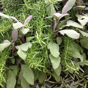 Herbs, Veggies, Fruit grown in a living wall