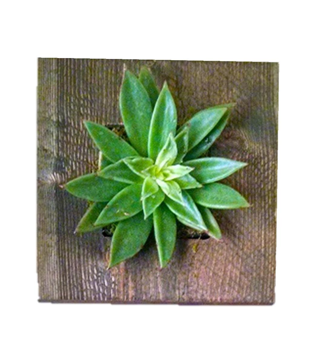 Unique planters make great gift ideas
