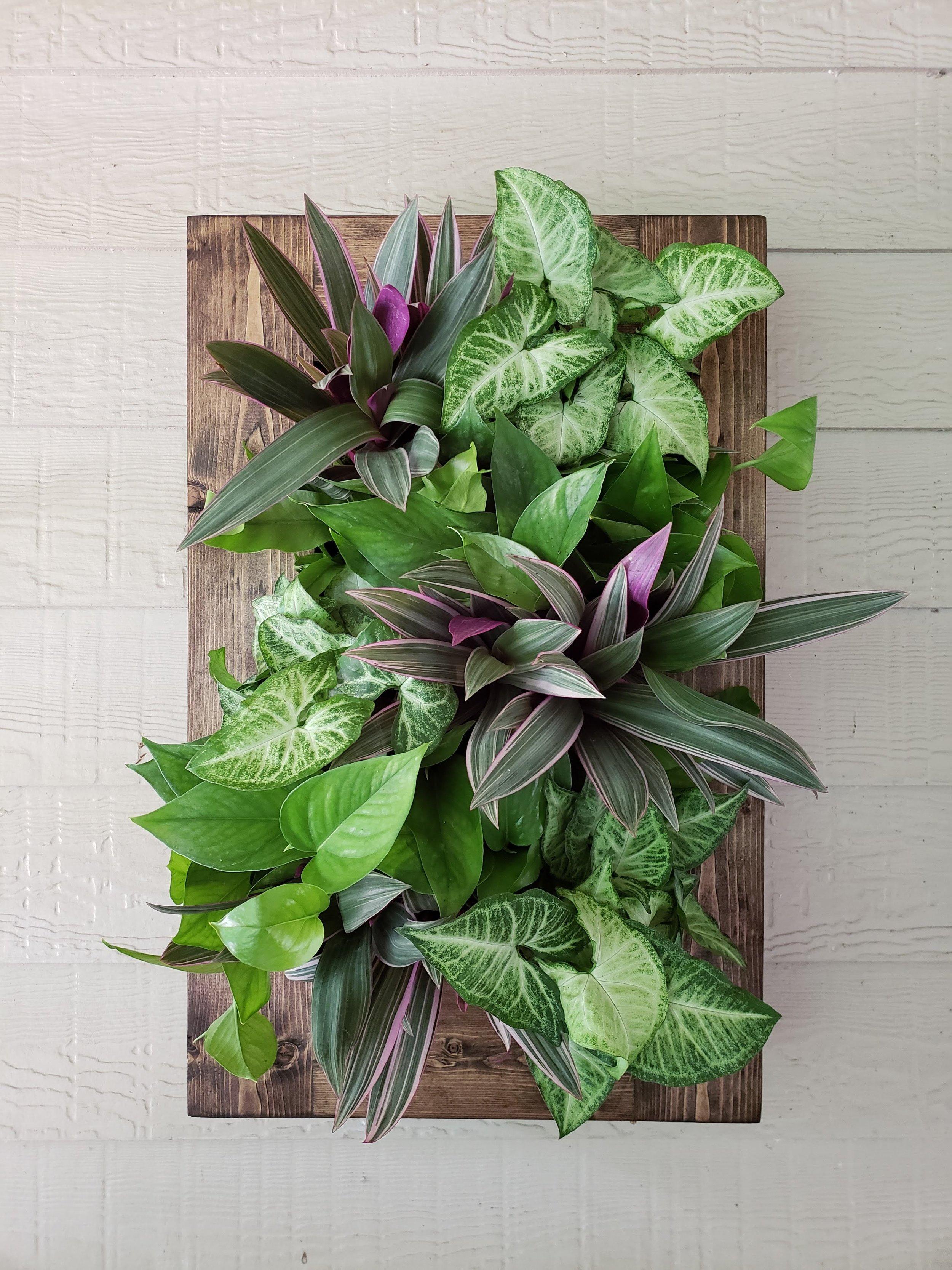 Framed Limes & Violets.jpg