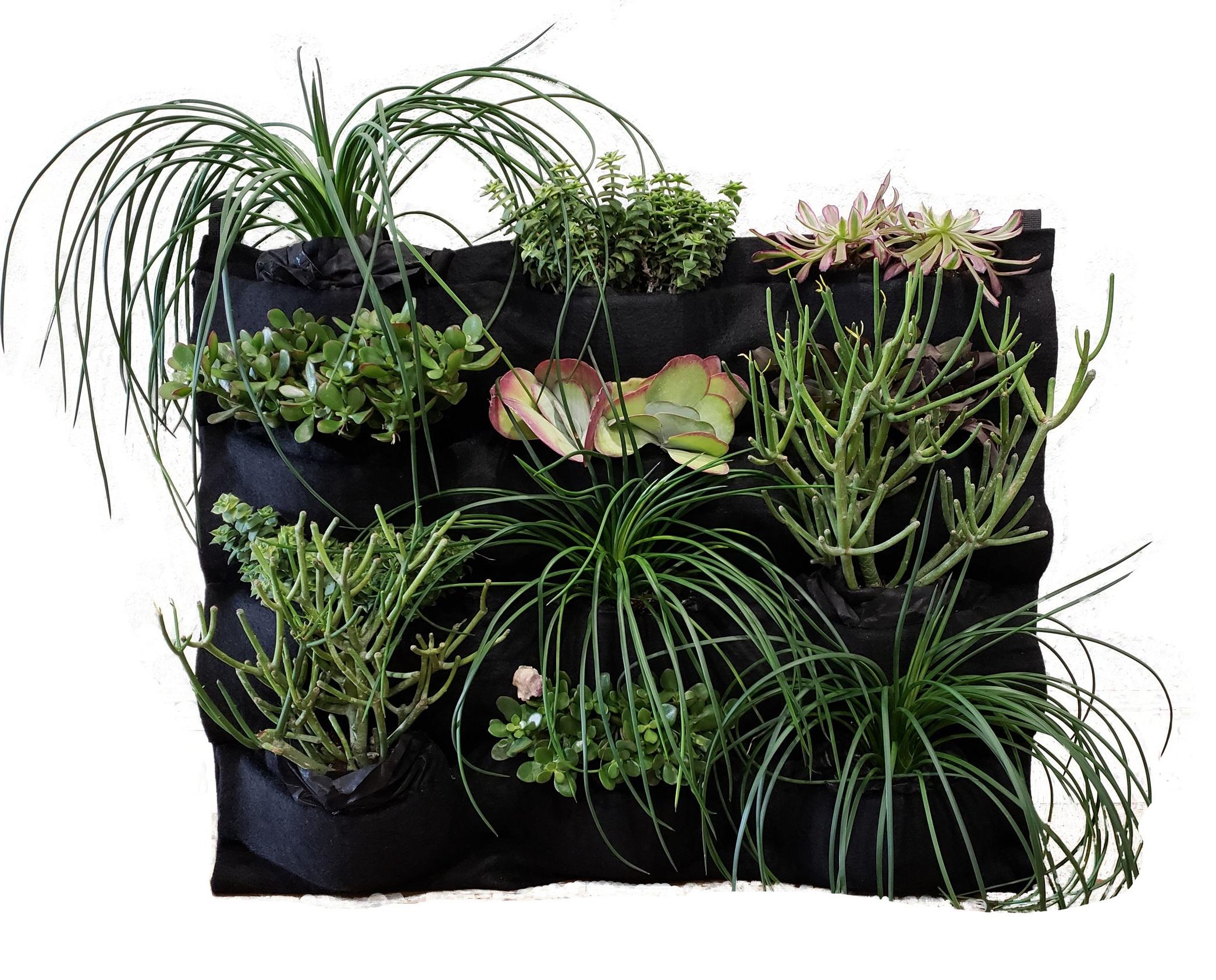 Pre-Planted Succulent Collection FloraFelt 12-Pocket Planter