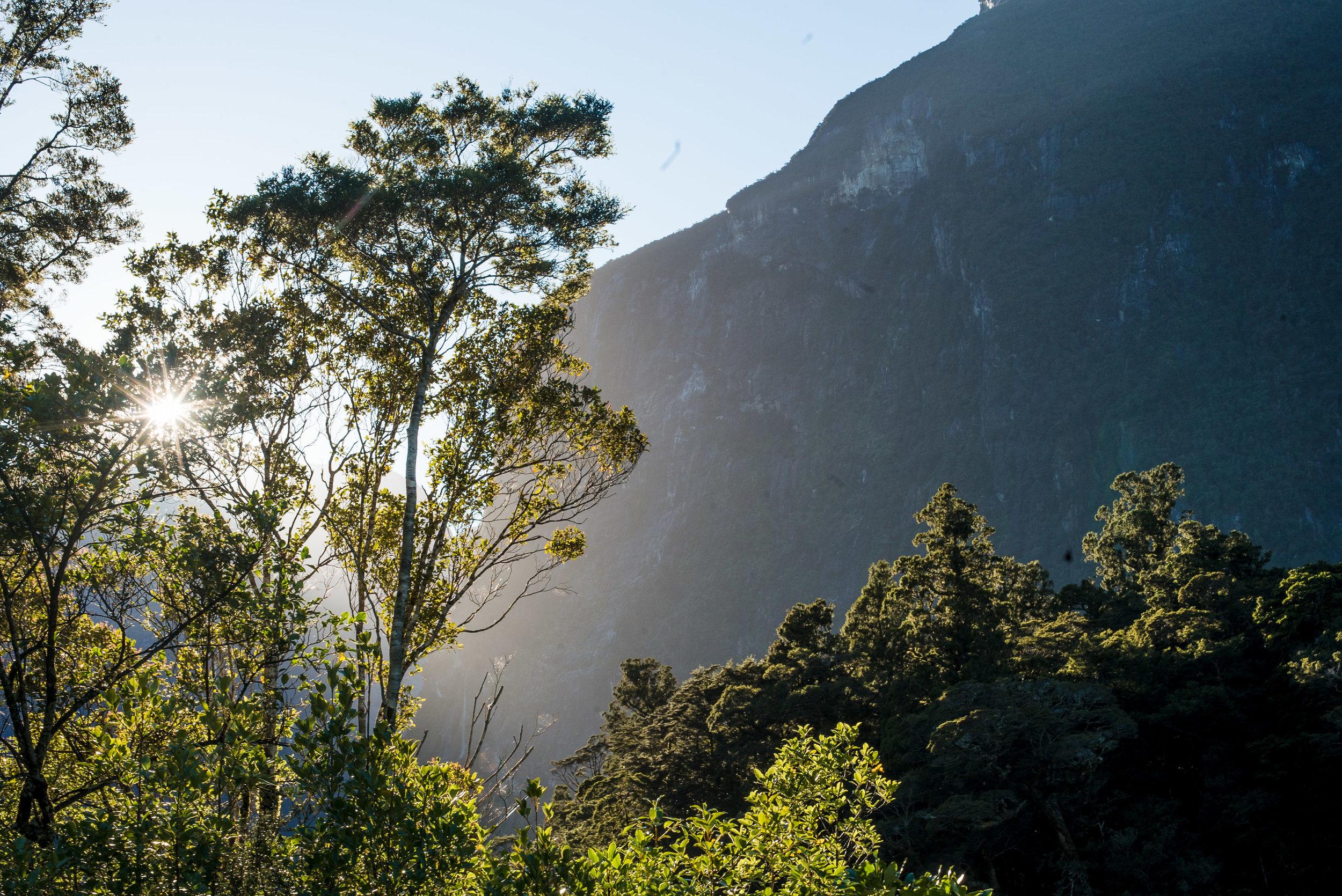 newzealand-01375.jpg