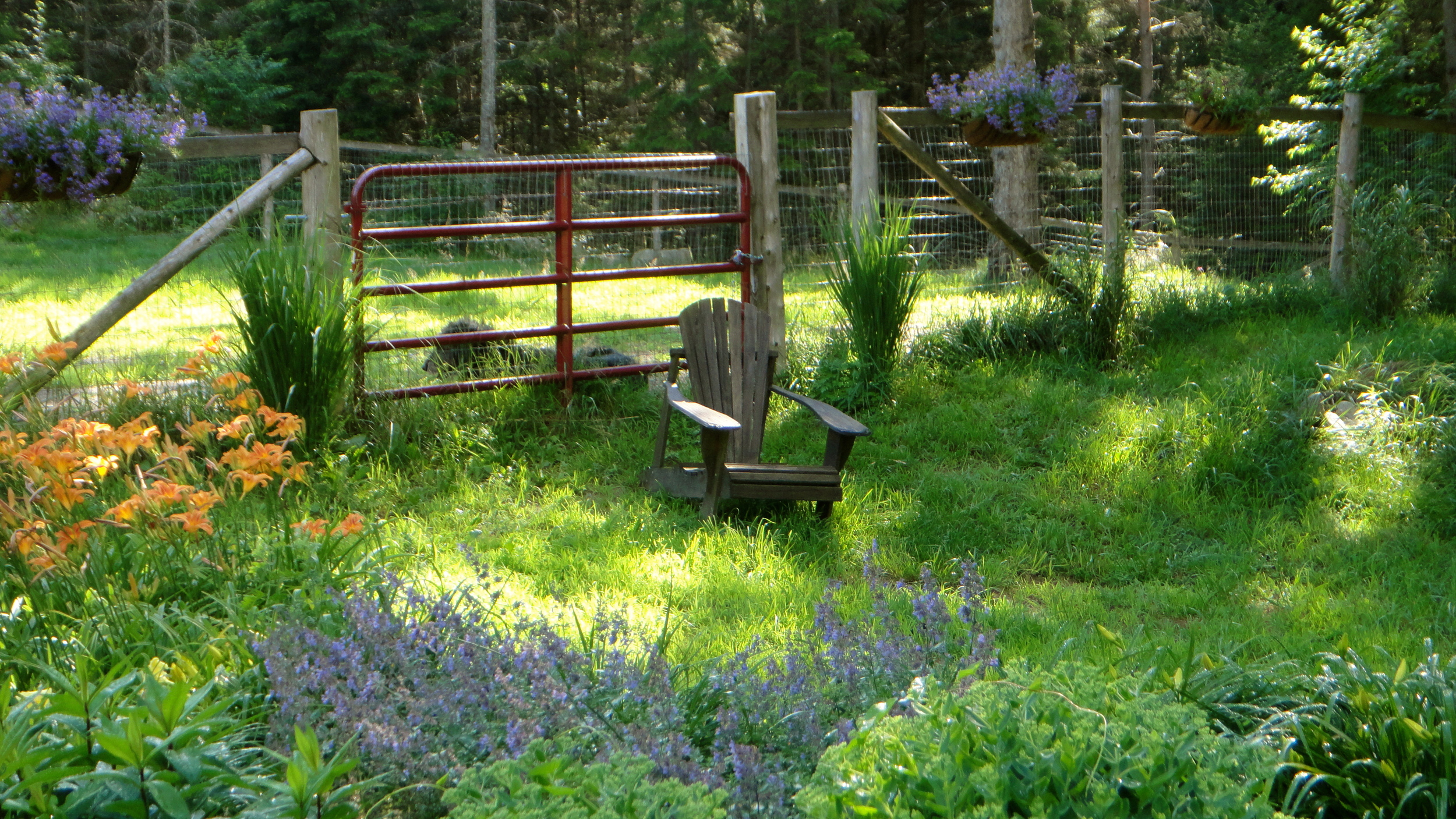 A 6-foot wide farm gate is sited to allow riding lawn mower access. Note cross posts on ends to strengthen fencing.