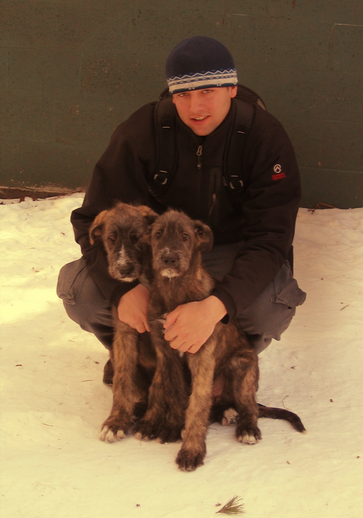 Robbi my son with 13-week Irish Wolfhound puppies