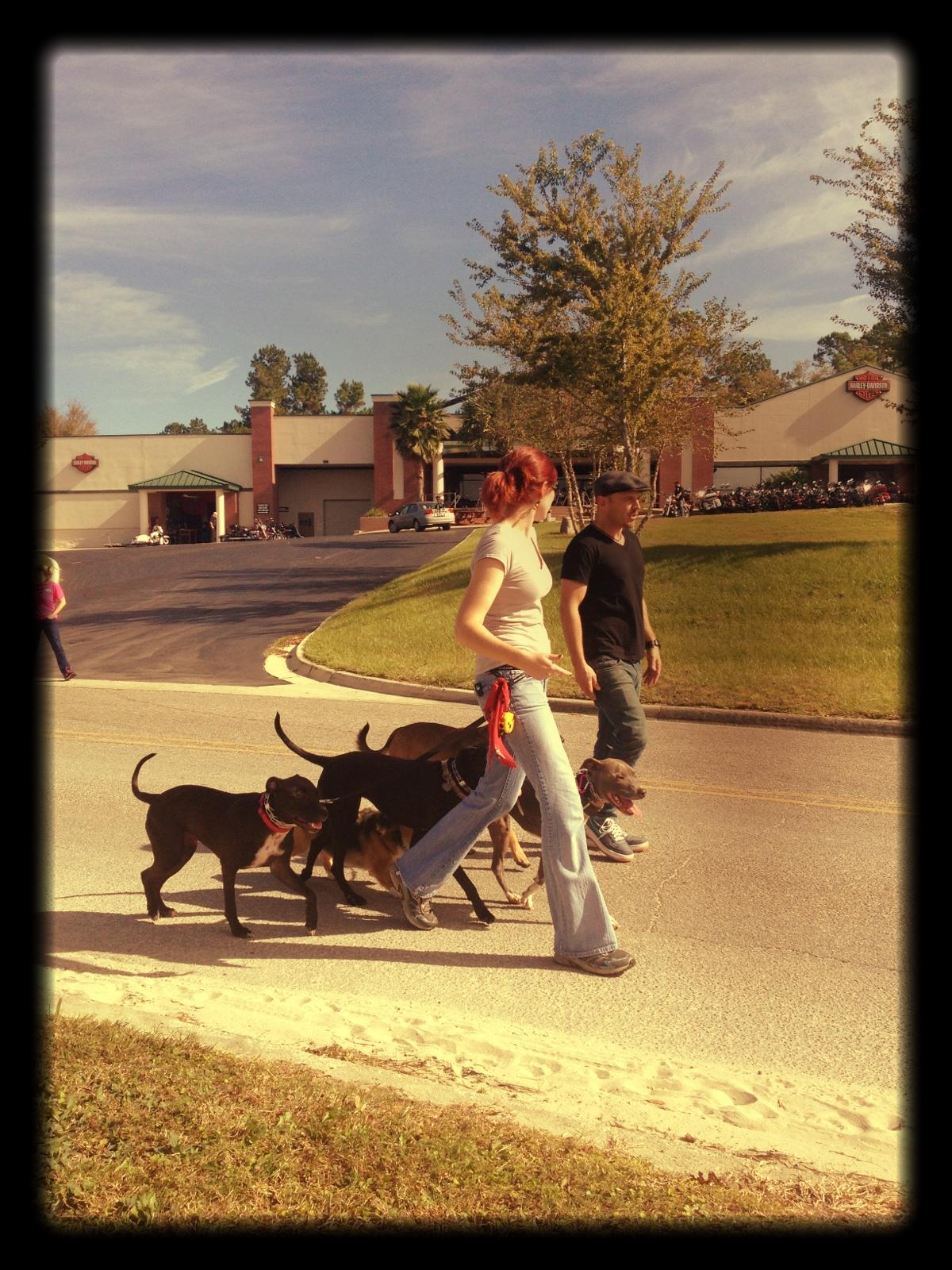 Pack Walk with myself and Sean O'Shea!