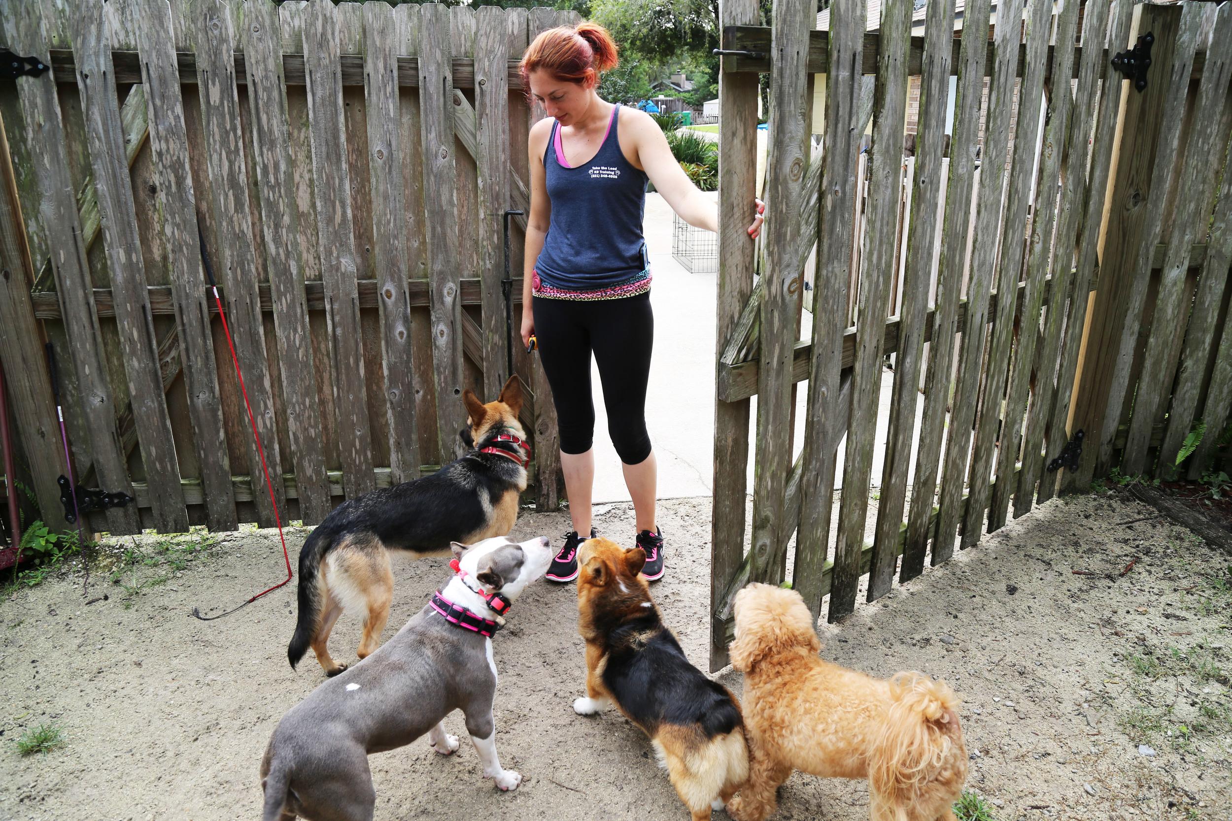 dog socialization training orlando