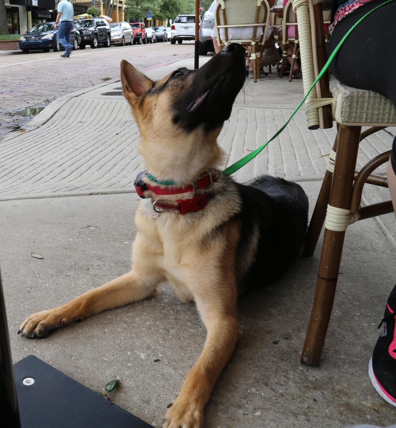 puppy training orlando fl