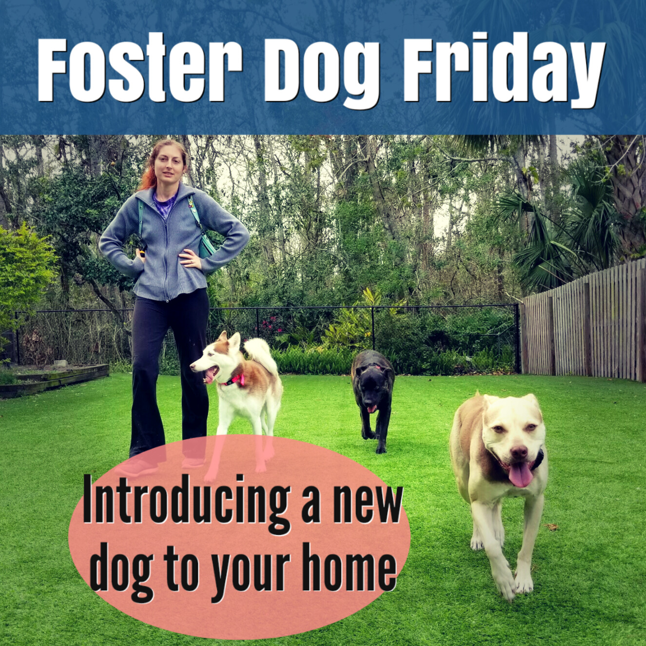 Foster Dog Friday