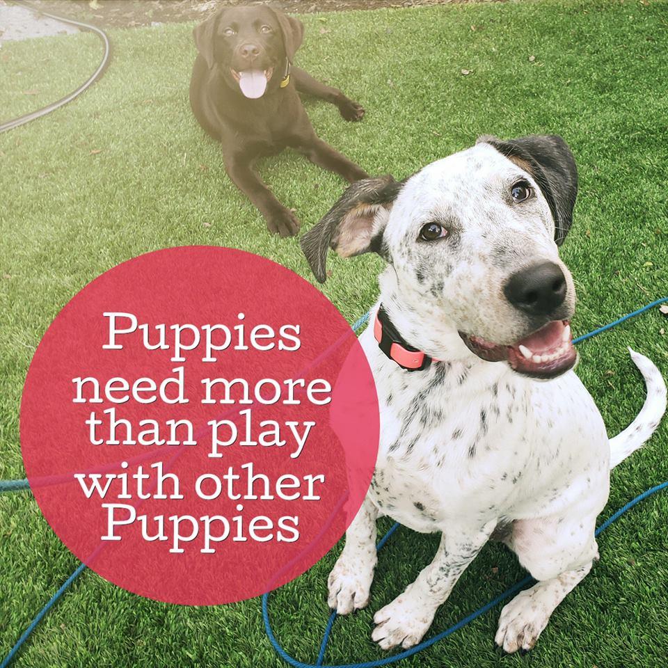 puppy training orlando