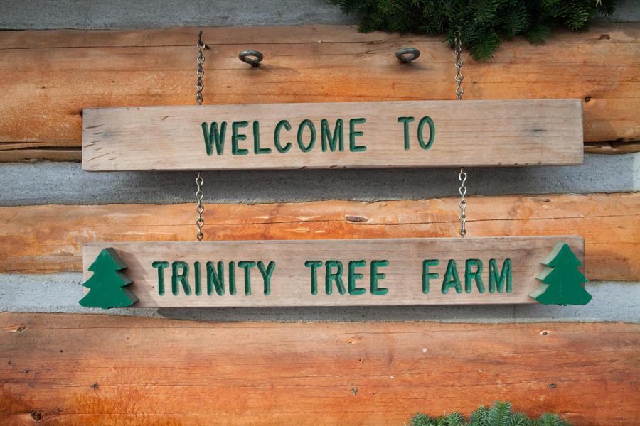 001-trinity-tree-farm.jpg