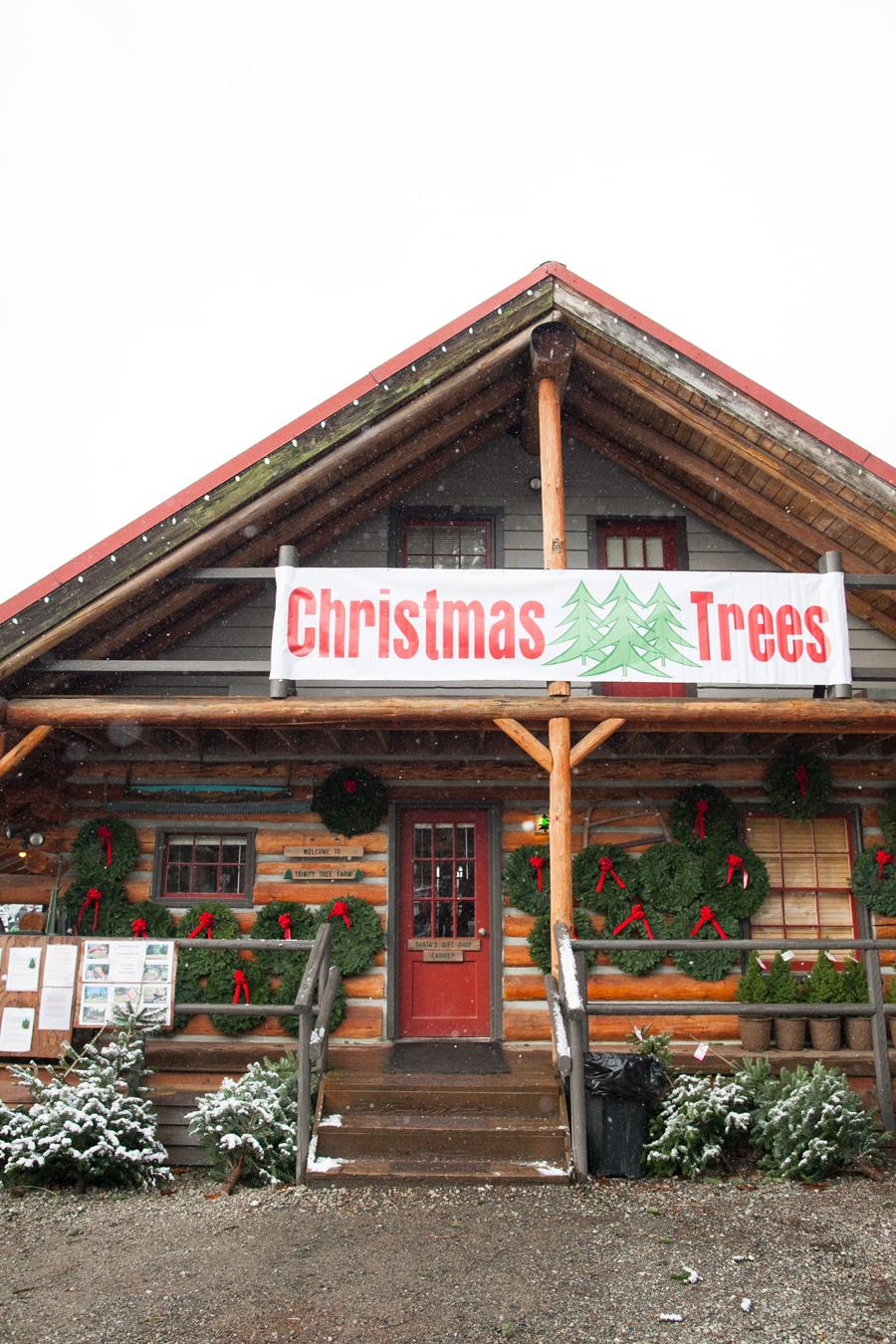 002-trinity-tree-farm.jpg