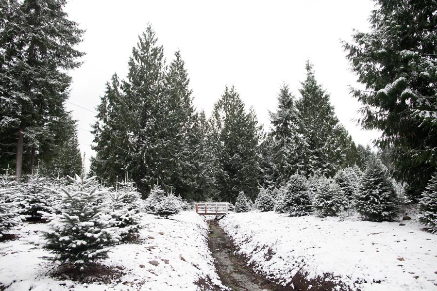 010-trinity-tree-farm.jpg