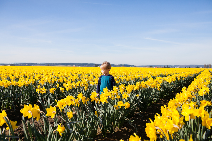 004-mount-vernon-washington-daffodils-norley-family.jpg
