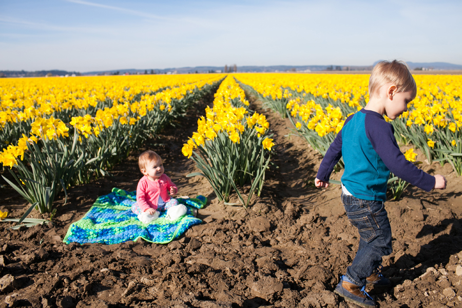 010-mount-vernon-washington-daffodils-norley-family.jpg