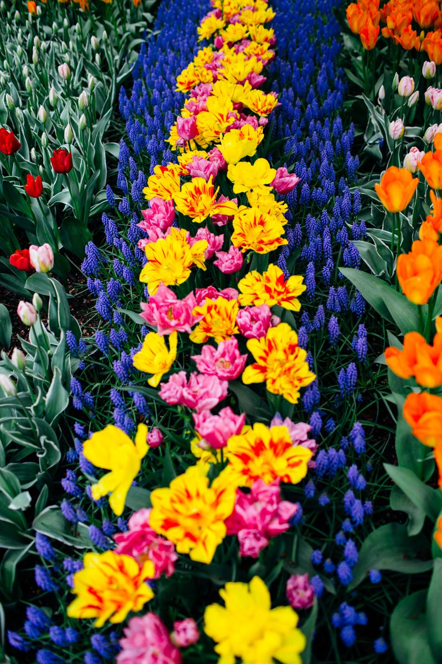 006-bellingham-skagit-photographer-photo-tulip-festival-katheryn-moran.jpg