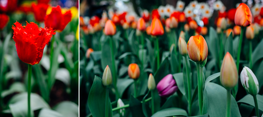 010-bellingham-skagit-photographer-photo-tulip-festival-katheryn-moran.jpg