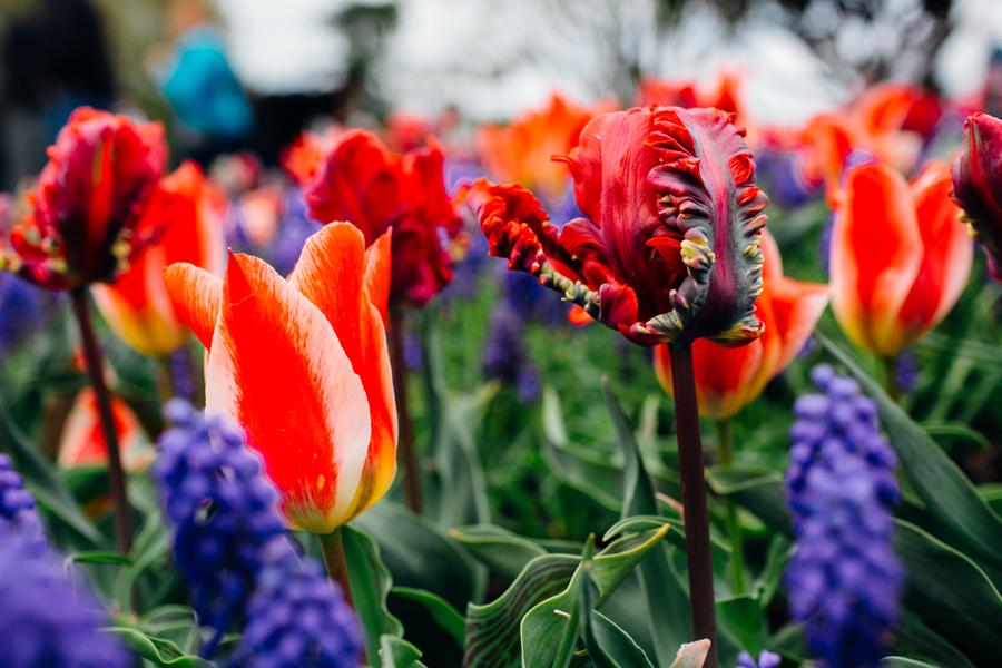 013-bellingham-skagit-photographer-photo-tulip-festival-katheryn-moran.jpg