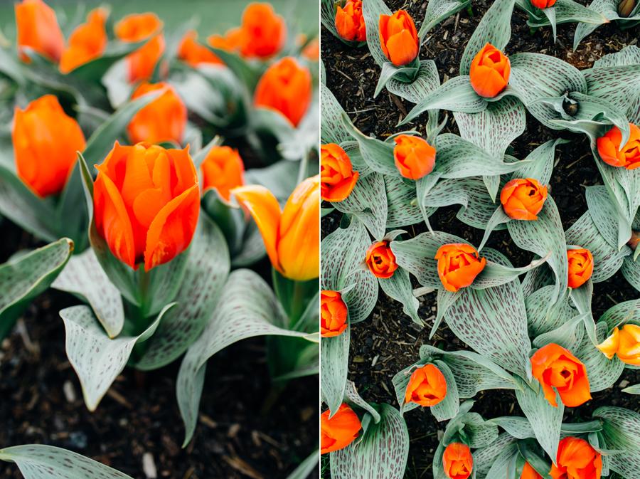 014-bellingham-skagit-photographer-photo-tulip-festival-katheryn-moran.jpg