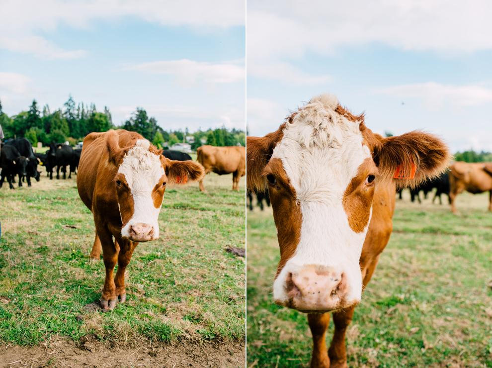 007-lynden-washington-cow-farm-family-photography-katheryn-moran-photography.jpg