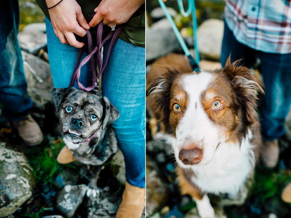 002-bellingham-fall-city-engagement-photographer-katheryn-moran-dogs-tommy-alyssa.jpg