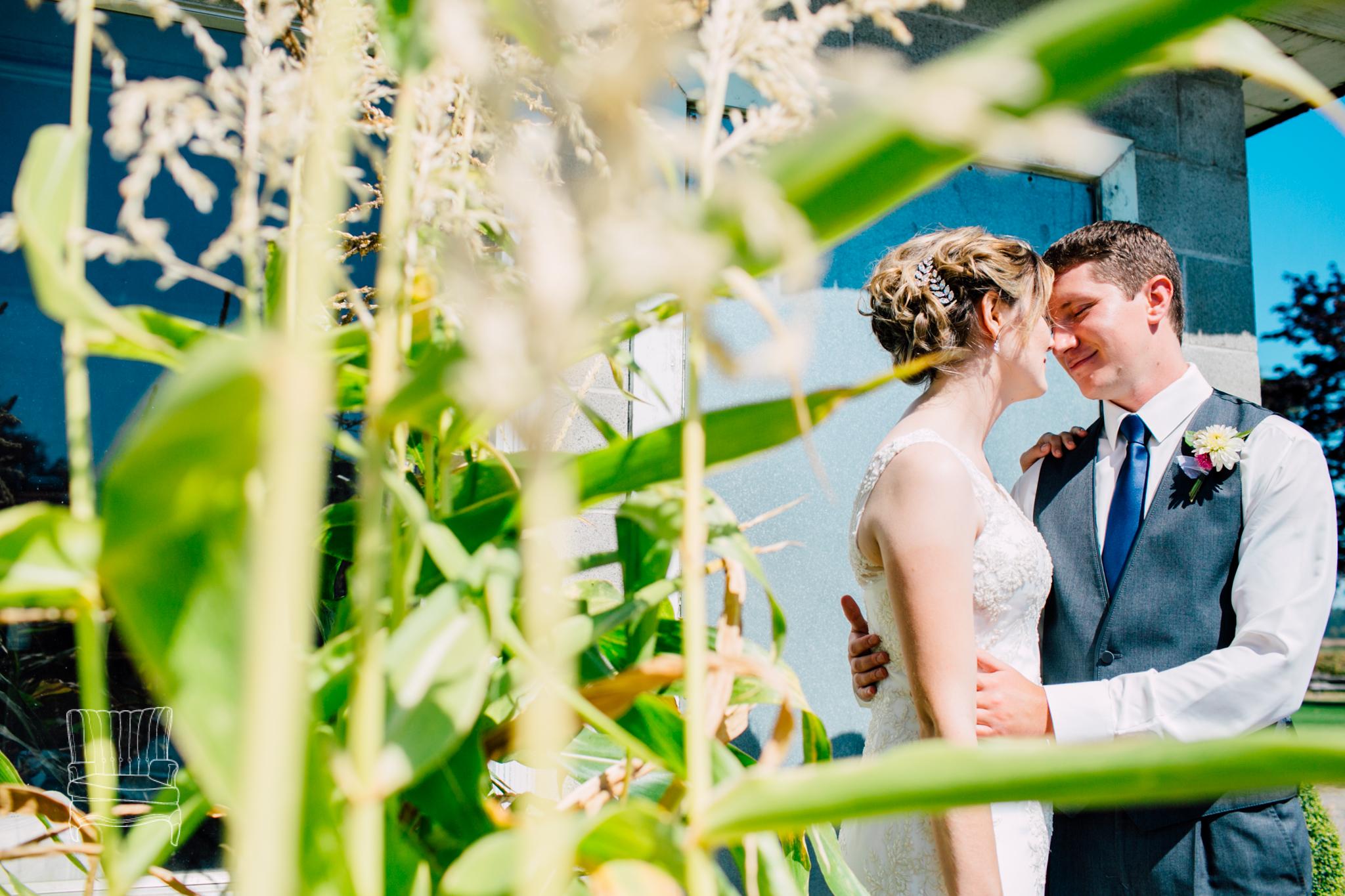 samson-estate-winery-wedding-katheryn-moran-photography-jillmike-4.jpg
