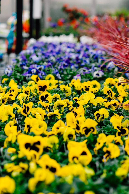 032-woodinville-photographer-molbaks-home-garden-marketing-spring-katheryn-moran.jpg