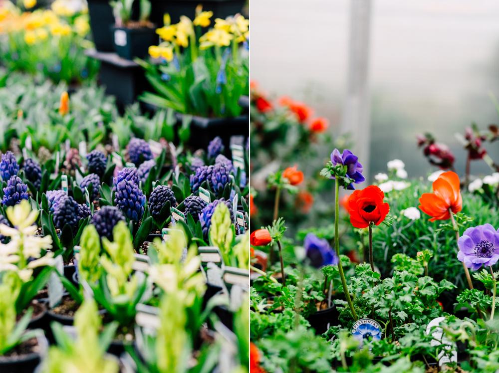 033-woodinville-photographer-molbaks-home-garden-marketing-spring-katheryn-moran.jpg
