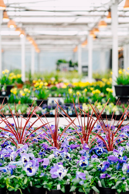 034-woodinville-photographer-molbaks-home-garden-marketing-spring-katheryn-moran.jpg