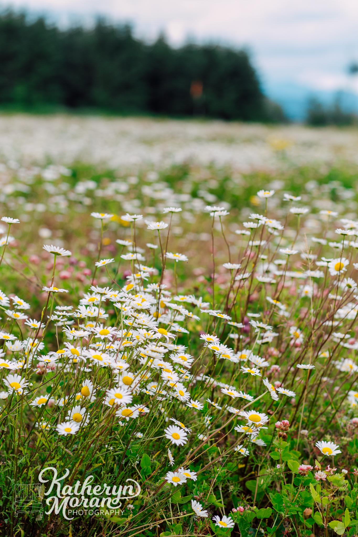 bellingham-marketing-photographer-katheryn-moran-alluvial-farms-spring-2018-8.jpg