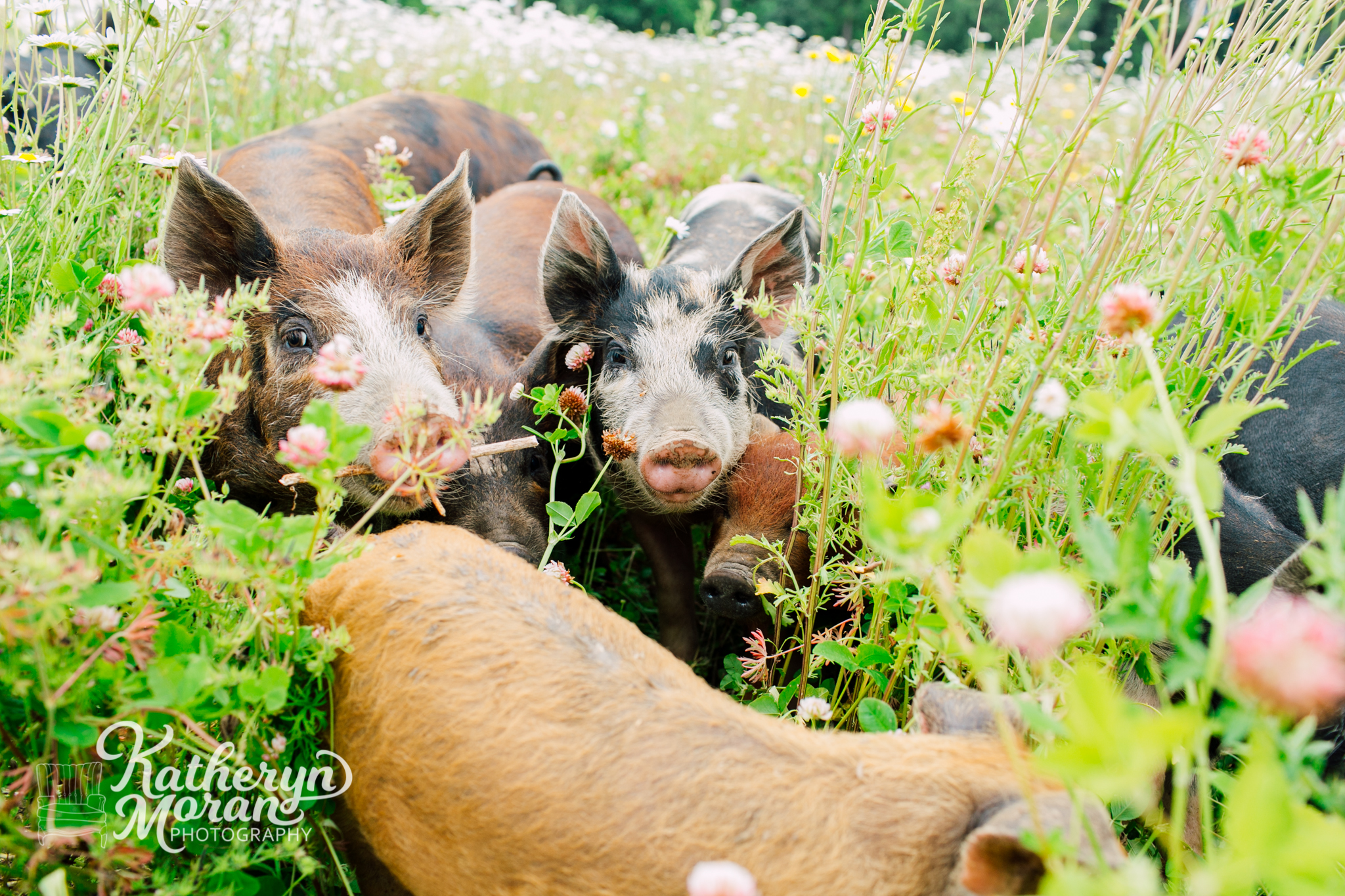 bellingham-marketing-photographer-katheryn-moran-alluvial-farms-spring-2018-15.jpg