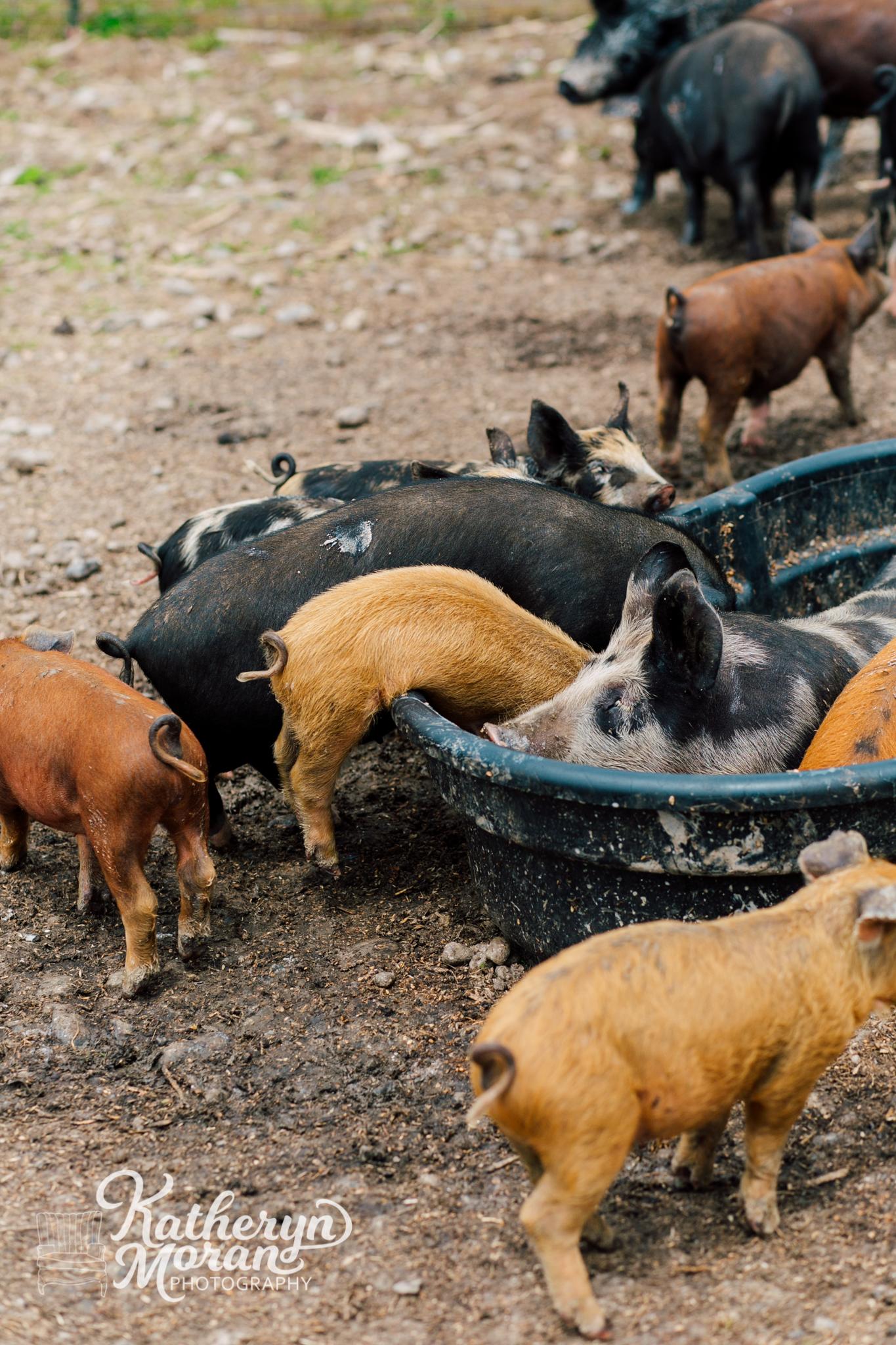 bellingham-marketing-photographer-katheryn-moran-alluvial-farms-spring-2018-21.jpg