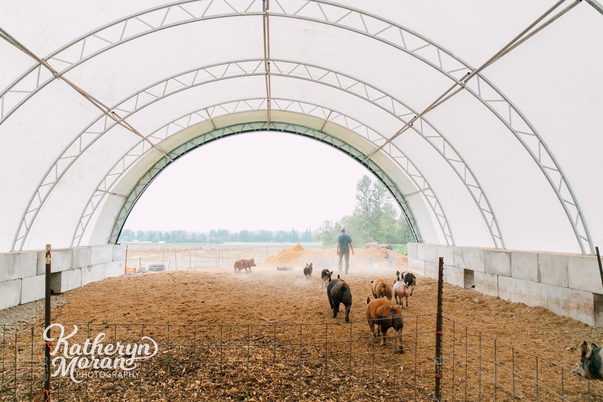 alluvial-farms-katheryn-moran-photography-september-2018-3.jpg
