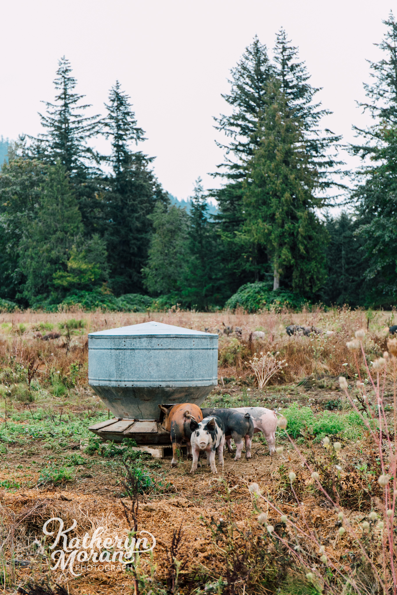 bellingham-farm-food-photographer-katheryn-moran-alluvial-farms-summer-two-5.jpg
