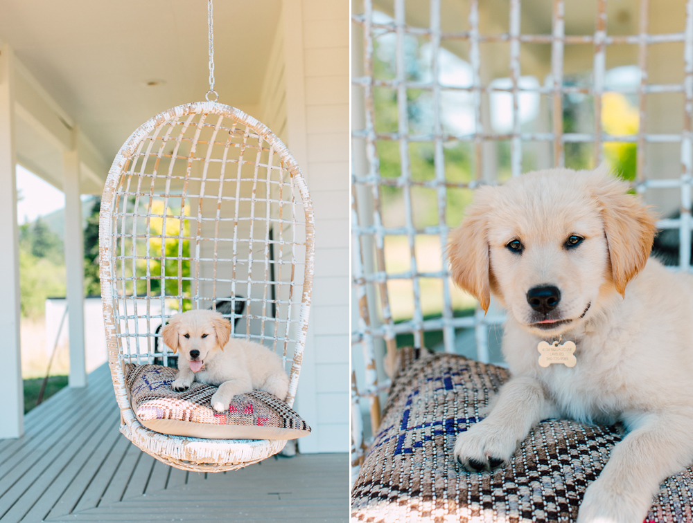 Belligham Pet Photographer, Bellingham Photographer