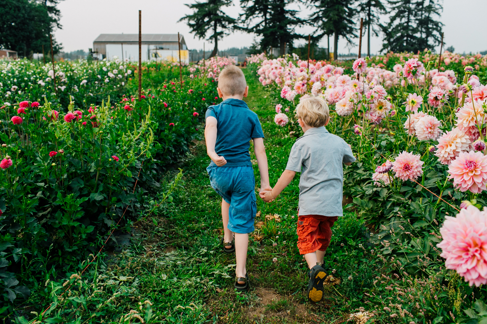 Bellingham Family Photographer Triple Wren Farms Katheryn Moran Dahlia Farm